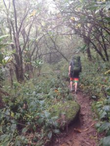 Hiking dense Kalalau Trail